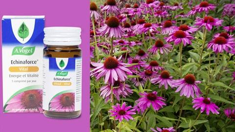Echinaforce d'A. Vogel : le complément alimentaire n'arrête pas la grippe