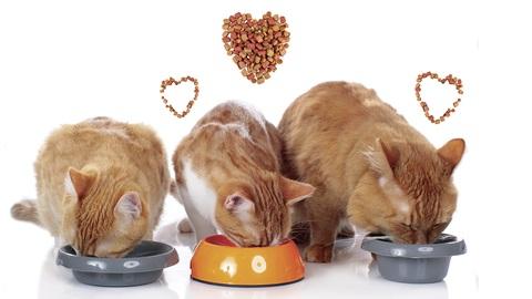 Alimentation pour chats : les friandises sont superflues