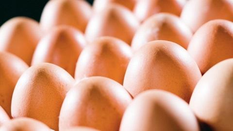 Fipronil dans produits alimentaires