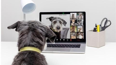 guide d'achat d'une webcam