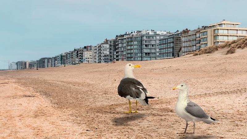 Blocs appartement à la côte belge
