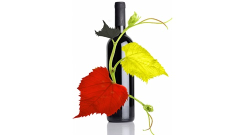 les-vins-belges